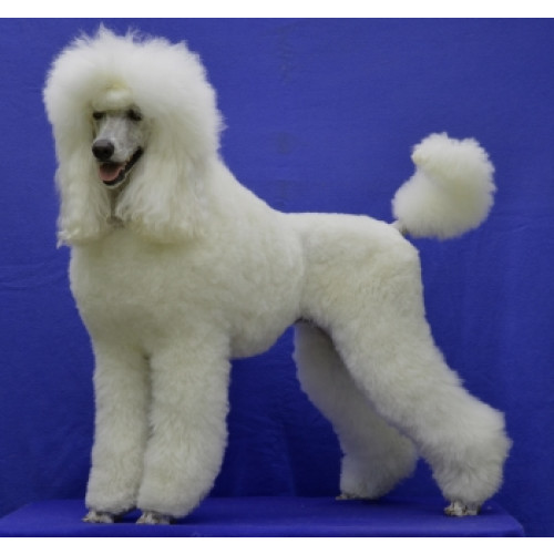 Neal