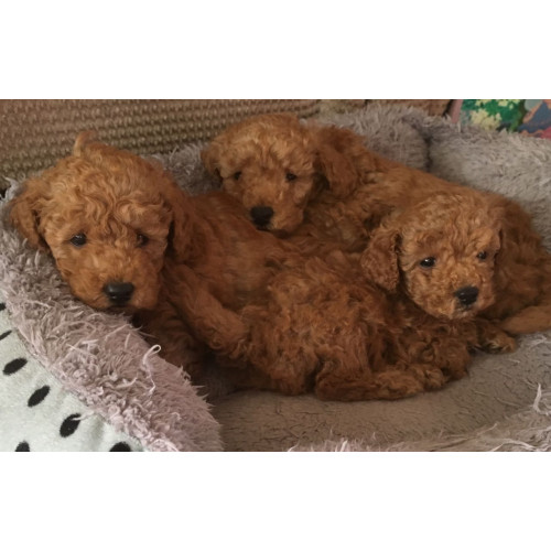 Bauer